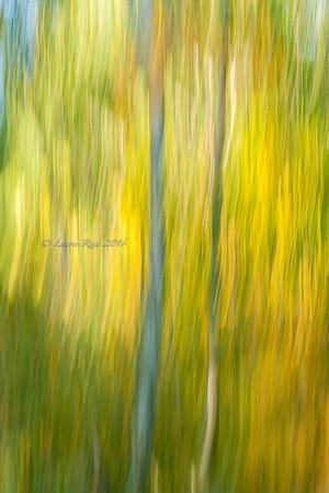 New Work Autumn 2016