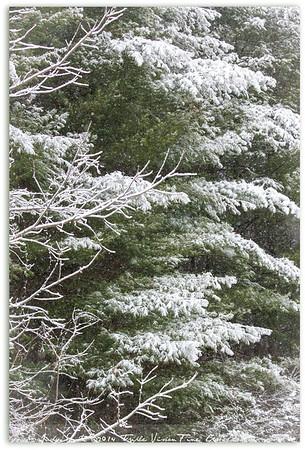 Sticky Snow