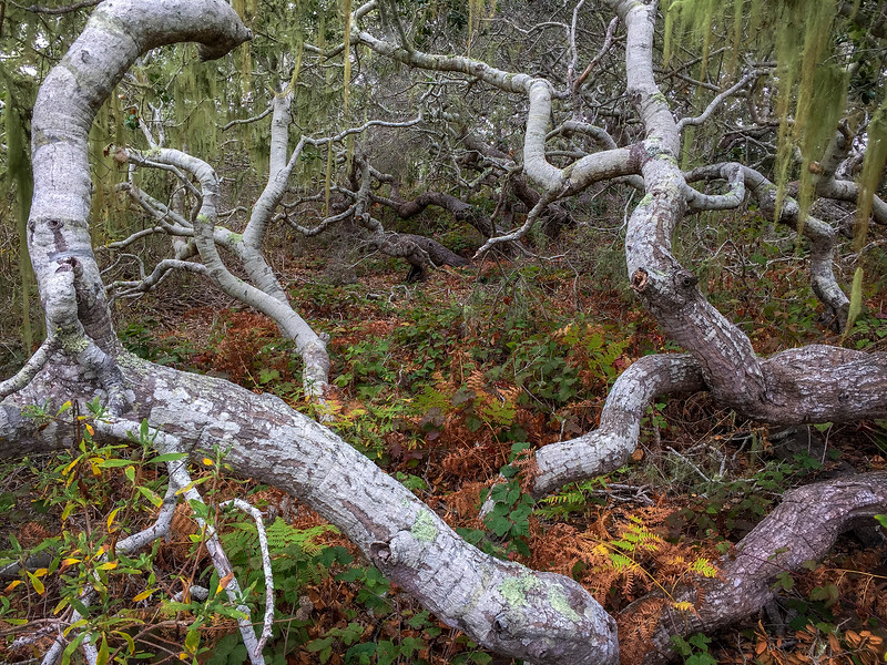 Los Osos Elfin Forest