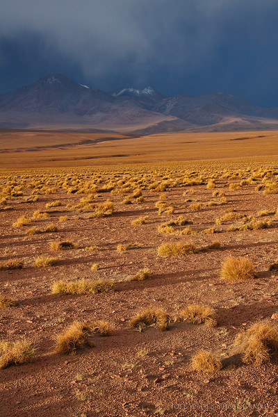 Storm Brewing in the Altiplano - Bolivia
