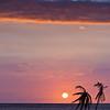 Two Palms - Hawaii