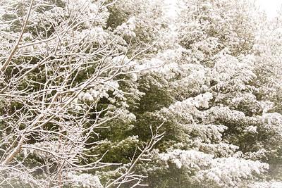 Stormy Snowy Sunday