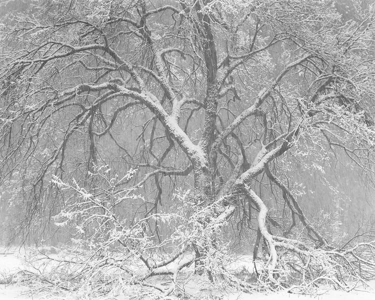Snow Storm, Yosemite, I