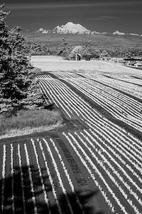 Crops,  Jacob Ebey House, Mt. Baker
