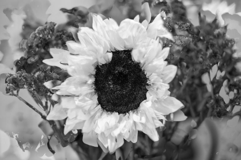 Sunflower in 3