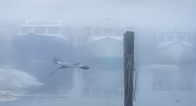 Kent Point Marina Resident Take Off Amidst Deadrise Boats at Rest.