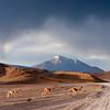 The Crossing - Bolivia