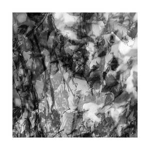 Leaves & Snow