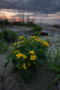 Seascape with flowers