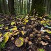 Mushroom time