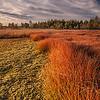 Coloful bog