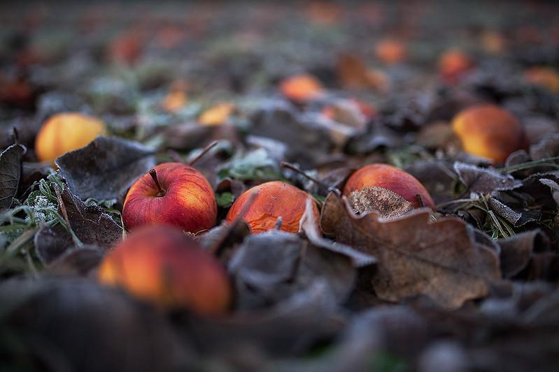 Latest apples