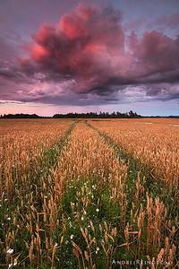 Summery path