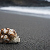 Little coral on the elusive black sand beach