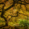 Underneath the Maple