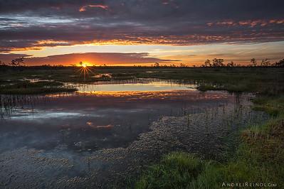 Flooded bog