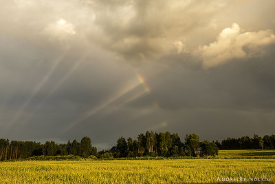 Rainbow spokes