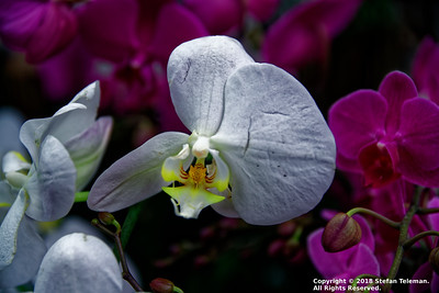 New York Botanical Garden - Orchid Show - March 10 2018