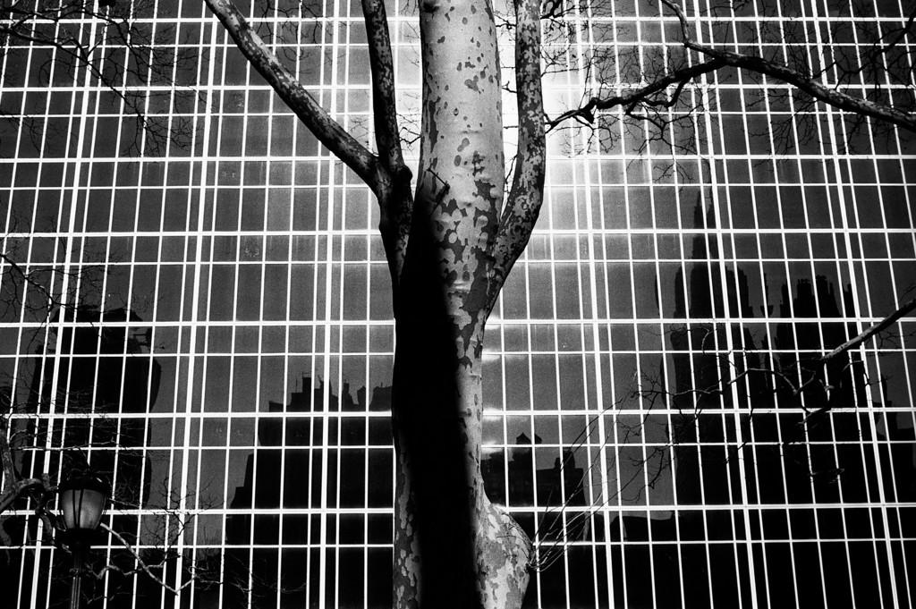 NYC, Midtown, February 2010, Tri-X 600, iiif