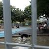 Dog run at Hudson River Park