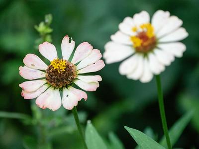 Lenoir Preserve Blooms
