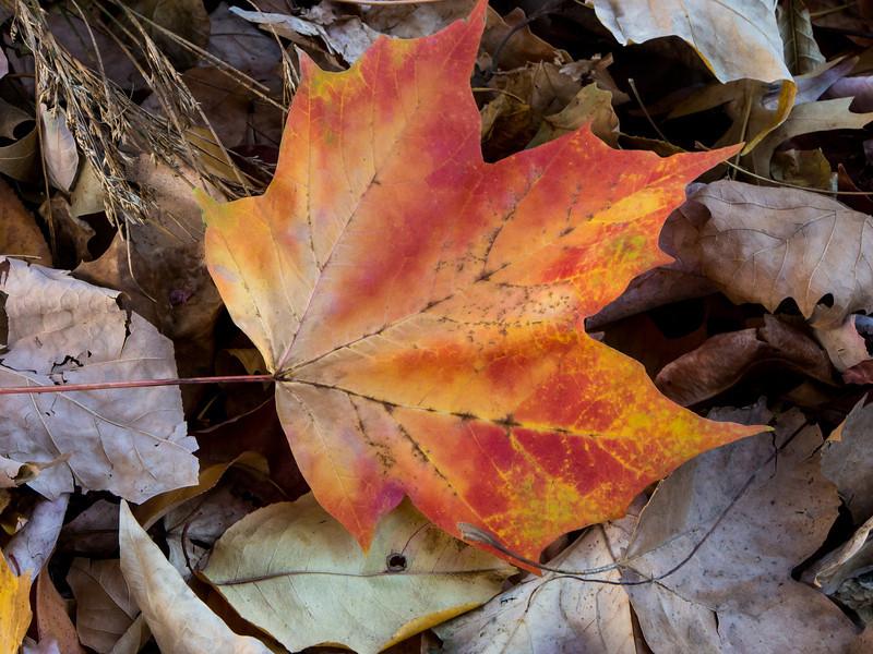 Leaf in Central Park