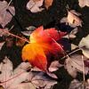Leaf in VCP