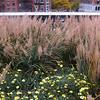 High Line - Fall 2013
