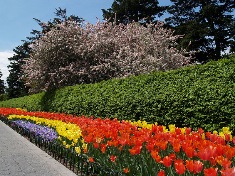 NYBG Spring 2007 - tulip bed