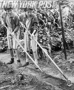 Two boys help keep Brooklyn Botanical Gardens beautiful. 1962