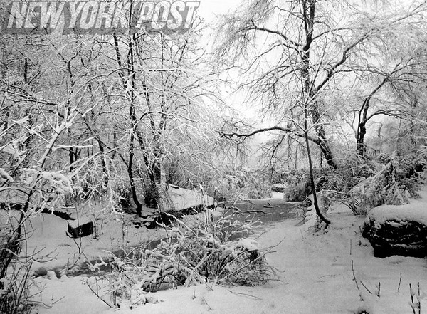 A winter scene of pristine loveliness in Prospect Park, Brooklyn, NY. 1967