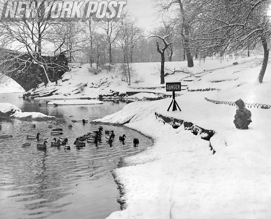 Jeanne Viken Willingly Feeds The ducks in Central Park During the Snow. 1948