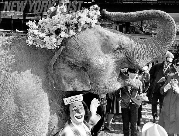 Targa the Elephant Sporting an Elephantine Easter Bonnet. 1966
