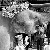 Targa the Elephant Sporting an Elephantine Easter Bonnet