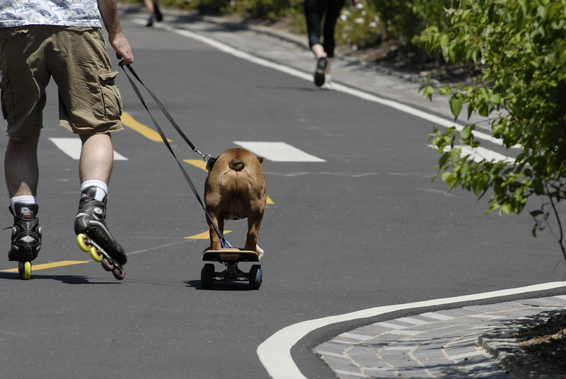 Dog on Skateboard being pulled along