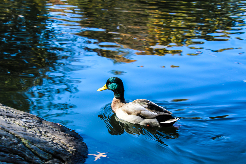 you will see wildlife on all central park tours