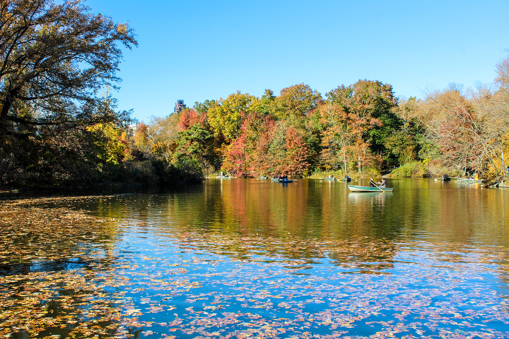 check out the rowboats on your central park walking tour