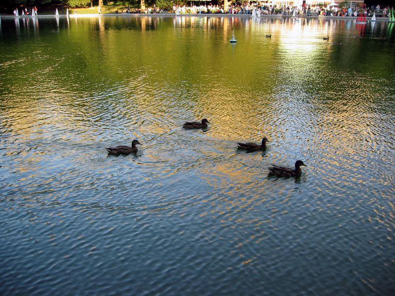 Ducks across skyline 3