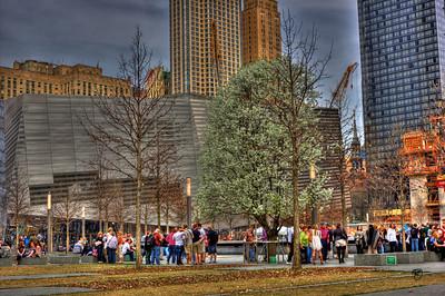 WTC 9/11 Memorial Survivor Tree