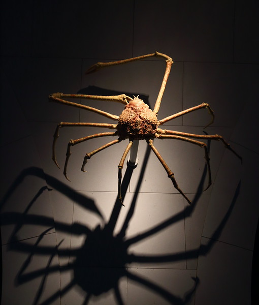 Spider at Natural History Museum