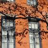 Tree Shadow on Tenth Avenue, NYC