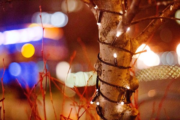 Tree at Night in Manhattan