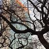UN Secretariat Building and Tree - Winter in New York City