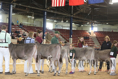 New York Spring Brown Swiss 15