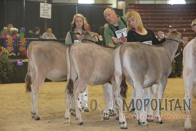 NY Spring Brown Swiss 2016