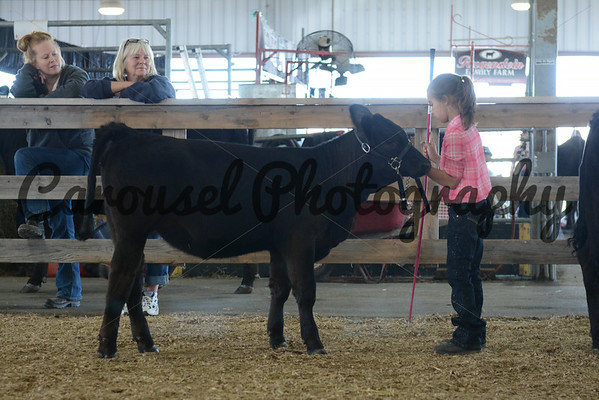 Youth Showmanship