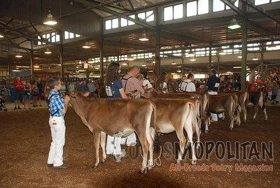 NY State Fair Jersey Show 2015