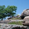 Harriman State Park NY - May 2009