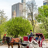 Horse carriage at Central Park