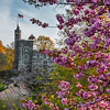 Belvedere Castle and Cherry Blossoms at Central Park